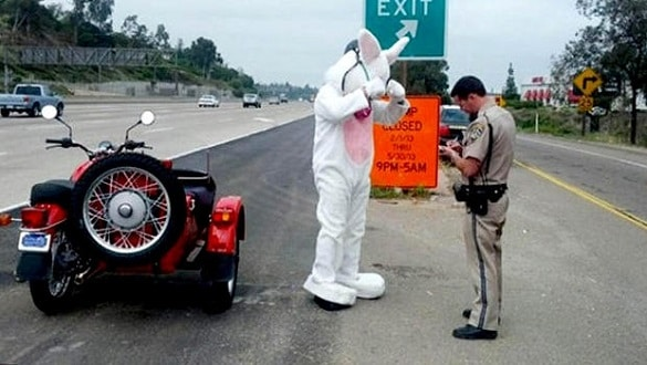 An Easter Bunny was pulled over by police for not wearing a helmet