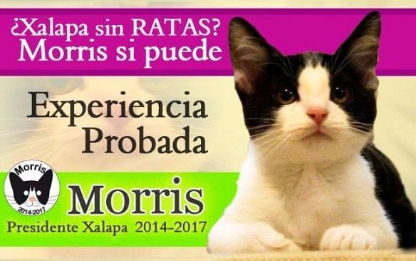 Morris for mayor