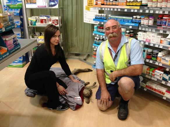 Kangaroo shuts Melbourne airport