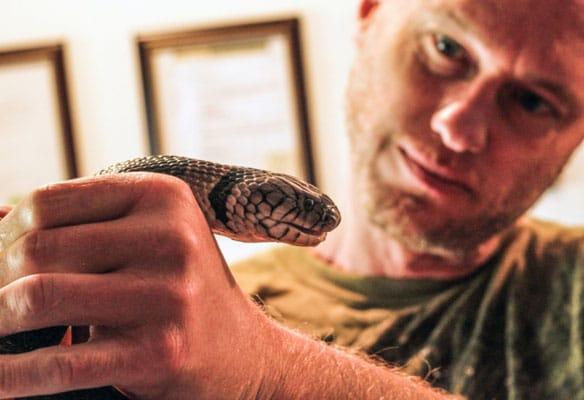 Snakebite addict